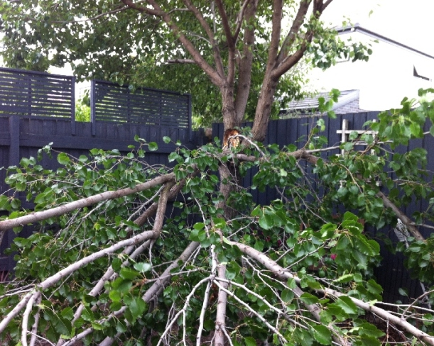 A third of the tree fell in our garden, a third in the neighbours and the rest was removed